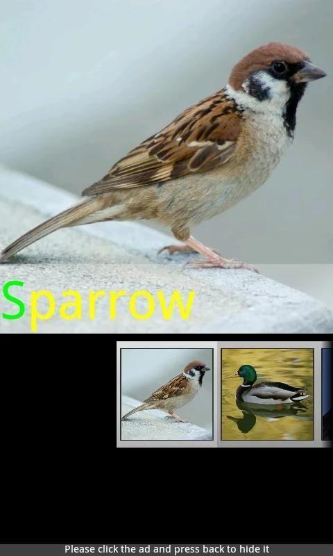 Bird Sounds & Ringtones screenshot 1